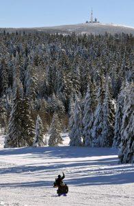 Harz - Rodeln